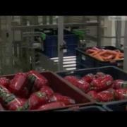 Автоматизированная конвейерная линия сборки заказов